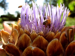 bees_on_thistle_mastered